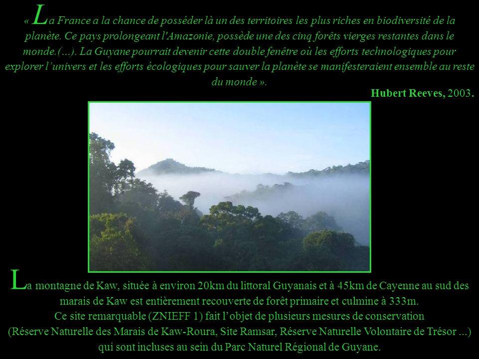 « La France a la chance de posséder là un des territoires les plus riches en biodiversité de la planète. Ce pays prolongeant l Amazonie, possède une des cinq forêts vierges restantes dans le monde.(…). La Guyane pourrait devenir cette double fenêtre où les efforts technologiques pour explorer l'univers et les efforts écologiques pour sauver la planète se manifesteraient ensemble au reste du monde ».