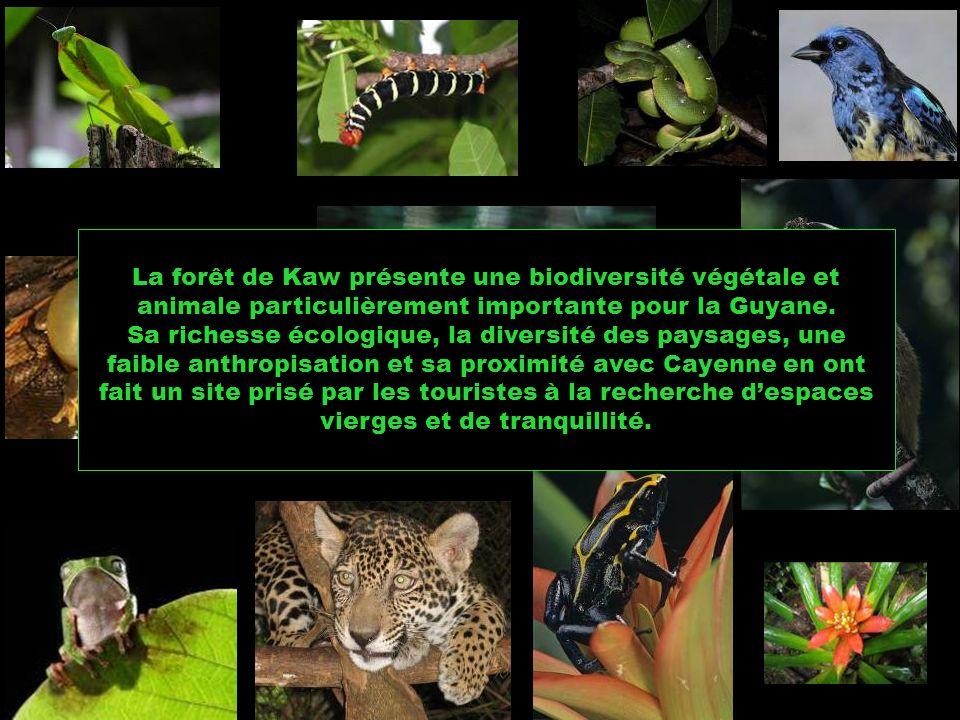 La forêt de Kaw présente une biodiversité végétale et animale particulièrement importante pour la Guyane.