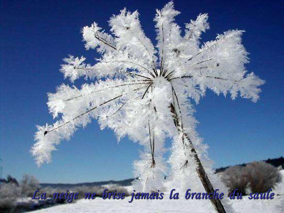 La neige ne brise jamais la branche du saule