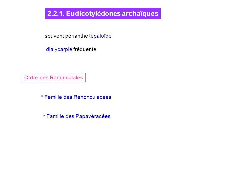 2.2.1. Eudicotylédones archaïques