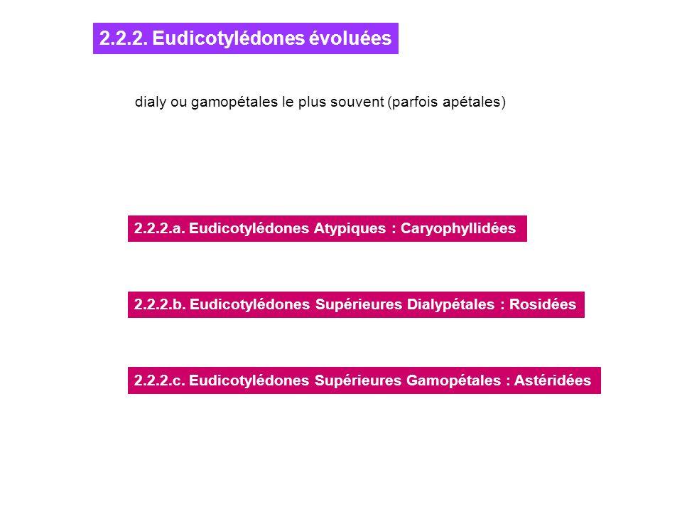 2.2.2. Eudicotylédones évoluées