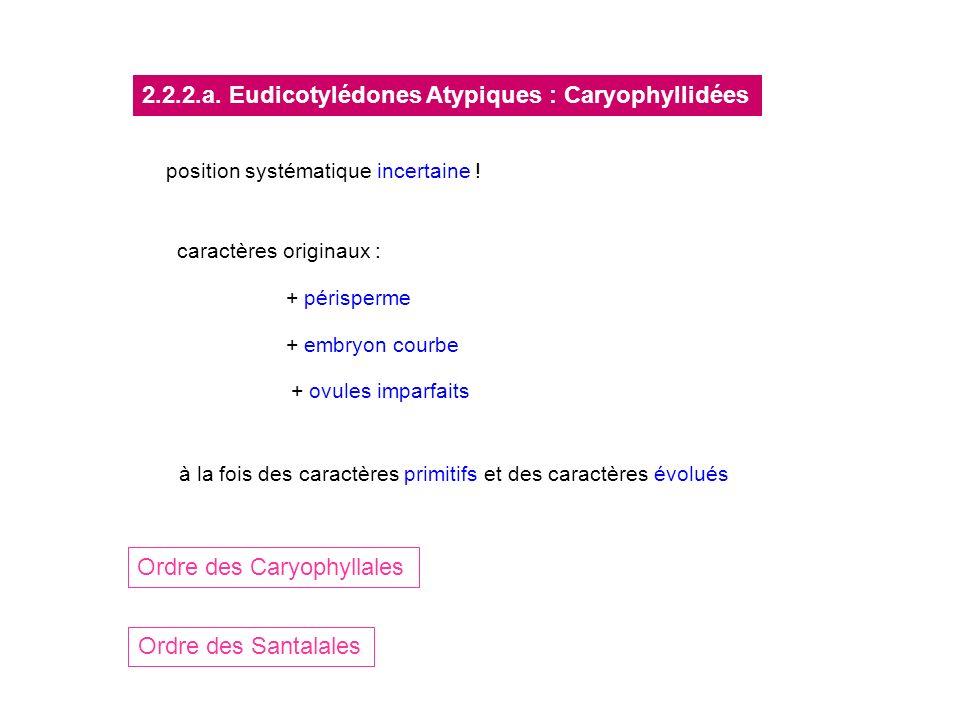 2.2.2.a. Eudicotylédones Atypiques : Caryophyllidées
