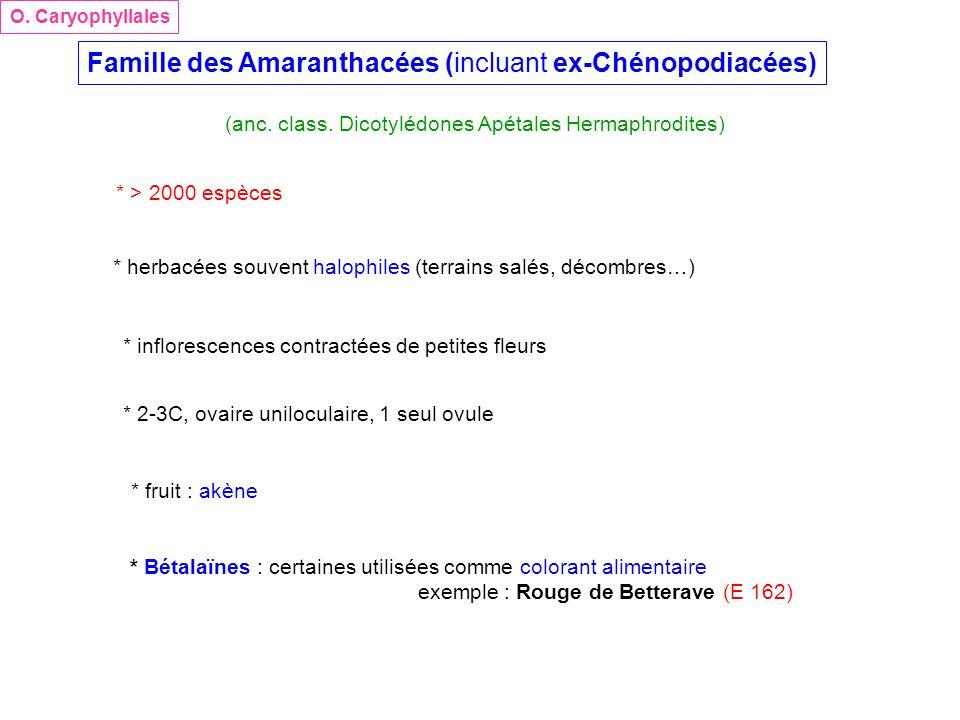 Famille des Amaranthacées (incluant ex-Chénopodiacées)