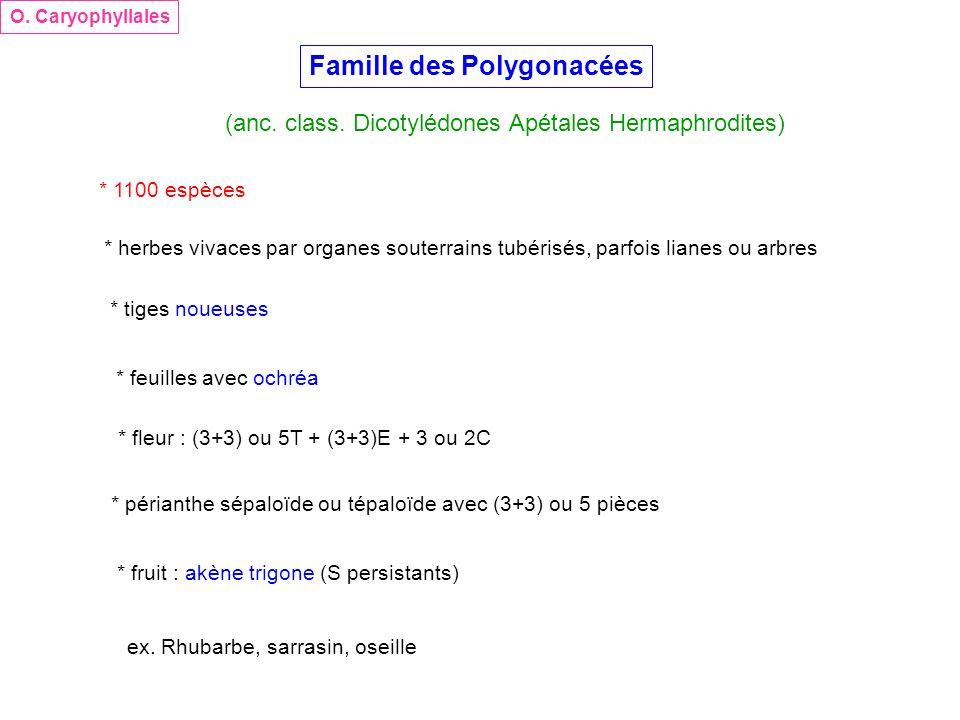 Famille des Polygonacées