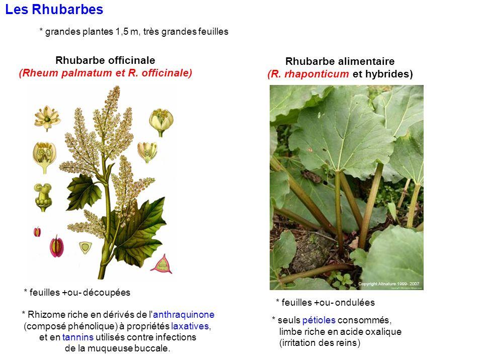 (Rheum palmatum et R. officinale) (R. rhaponticum et hybrides)