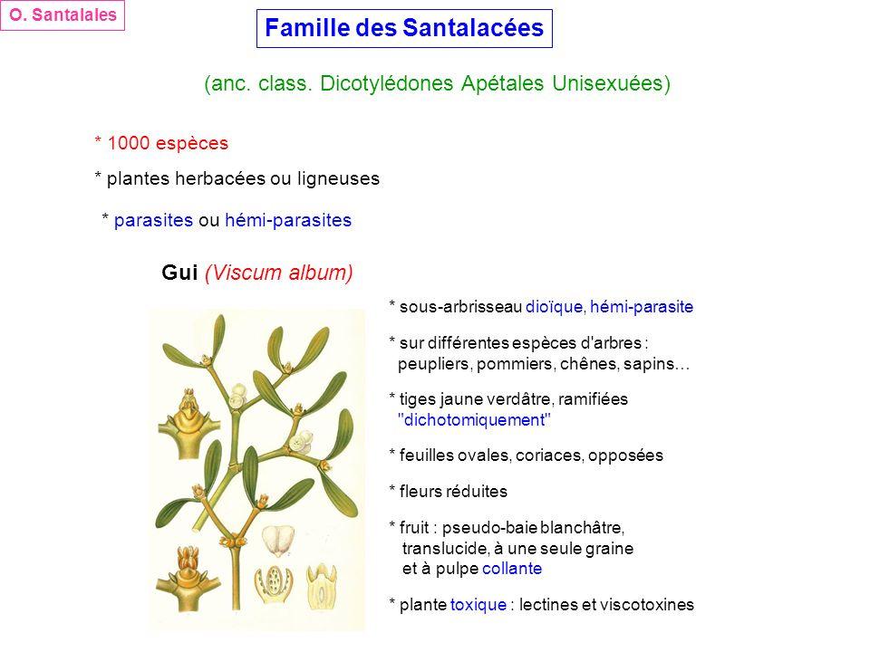Famille des Santalacées