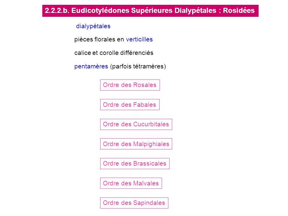 2.2.2.b. Eudicotylédones Supérieures Dialypétales : Rosidées
