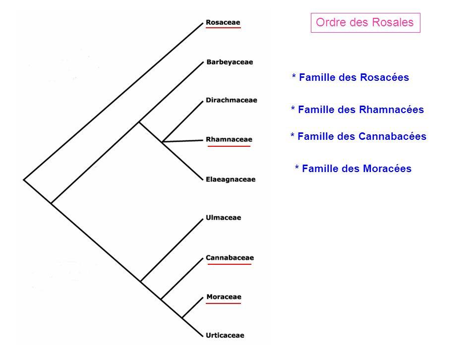 Ordre des Rosales * Famille des Rosacées * Famille des Rhamnacées