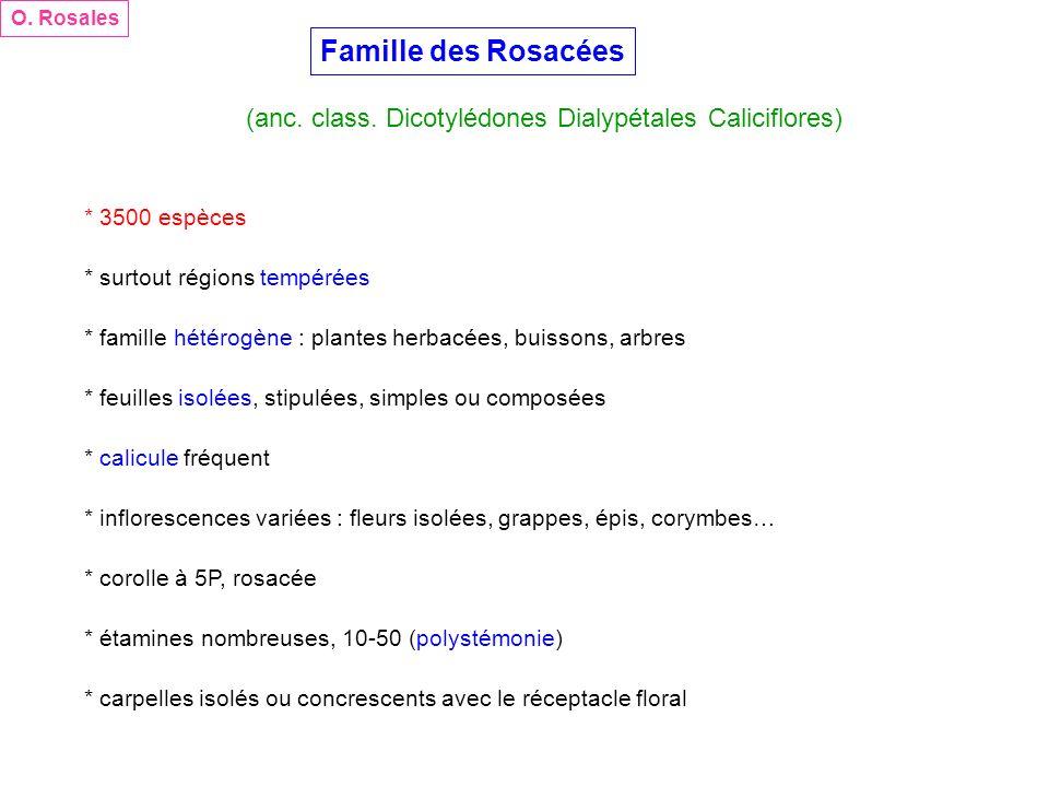 O. Rosales Famille des Rosacées. (anc. class. Dicotylédones Dialypétales Caliciflores) * 3500 espèces.