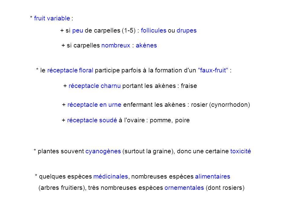 * fruit variable : + si peu de carpelles (1-5) : follicules ou drupes. + si carpelles nombreux : akènes.
