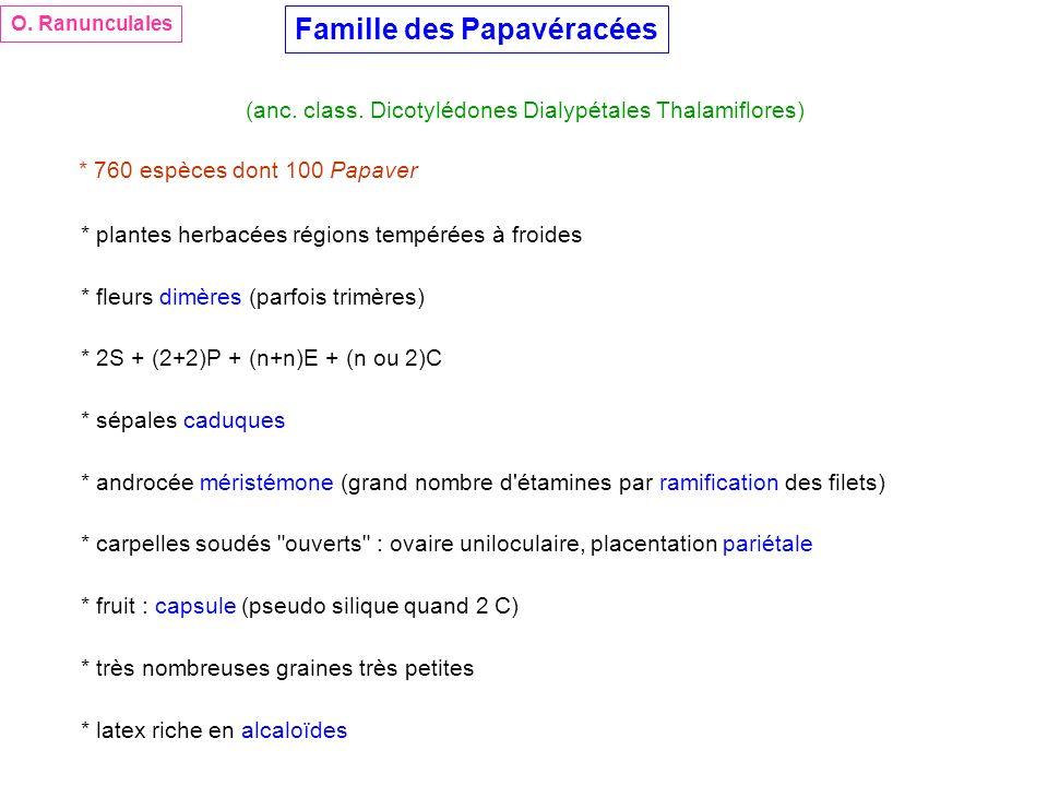 Famille des Papavéracées