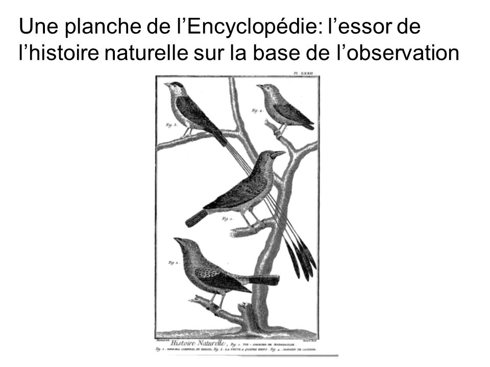 Une planche de l'Encyclopédie: l'essor de l'histoire naturelle sur la base de l'observation