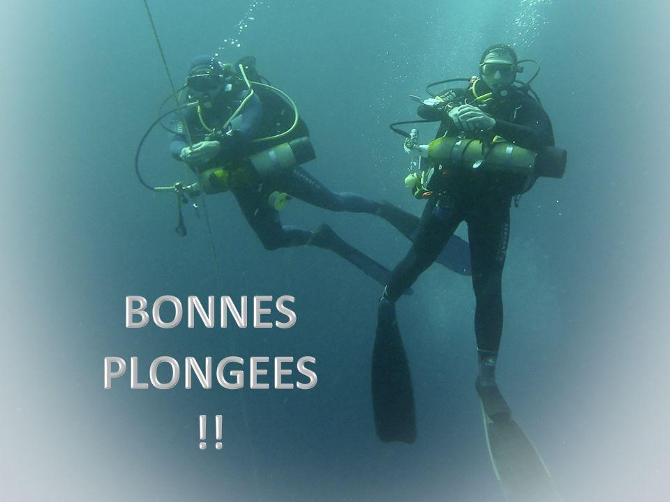 BONNES PLONGEES !!