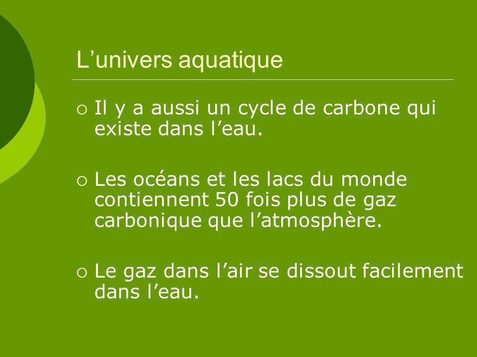 L'univers aquatique Il y a aussi un cycle de carbone qui existe dans l'eau.