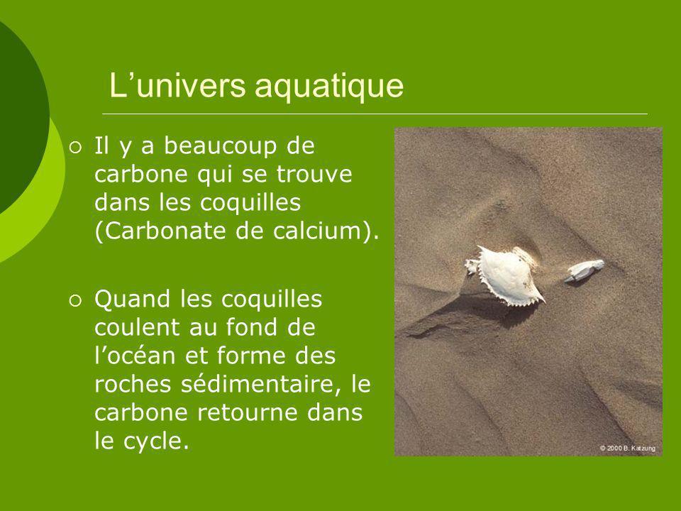 L'univers aquatique Il y a beaucoup de carbone qui se trouve dans les coquilles (Carbonate de calcium).