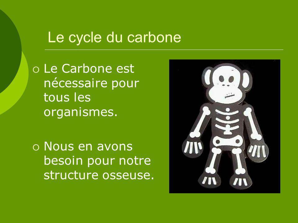 Le cycle du carbone Le Carbone est nécessaire pour tous les organismes.