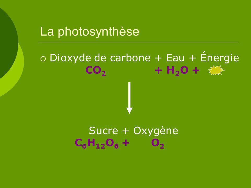 La photosynthèse Dioxyde de carbone + Eau + Énergie CO2 + H2O + Sucre + Oxygène C6H12O6 + O2.