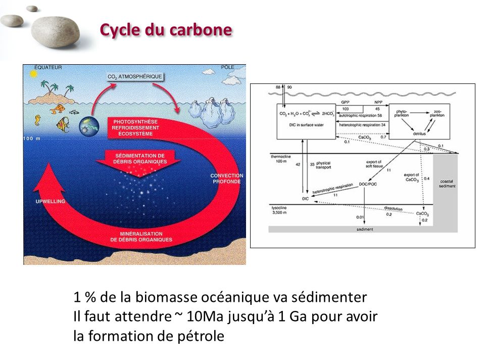 Cycle du carbone 1 % de la biomasse océanique va sédimenter