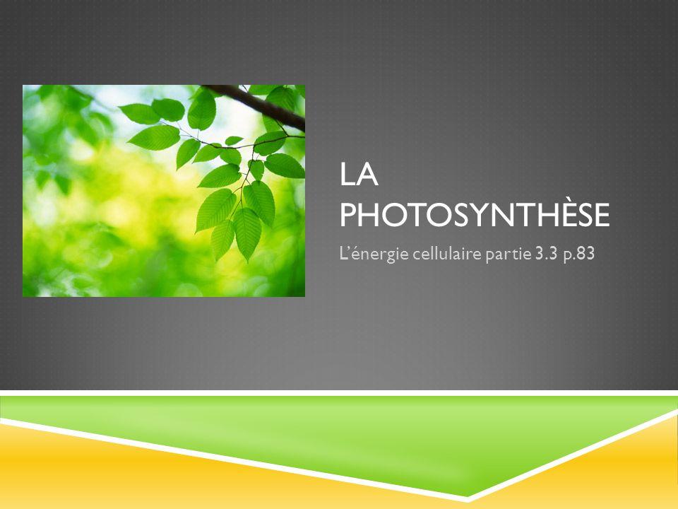L'énergie cellulaire partie 3.3 p.83