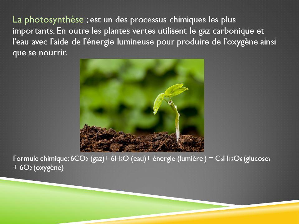 La photosynthèse ; est un des processus chimiques les plus importants