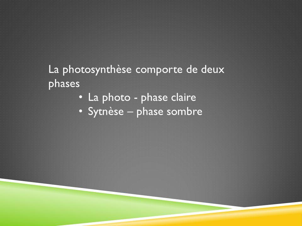 La photosynthèse comporte de deux phases