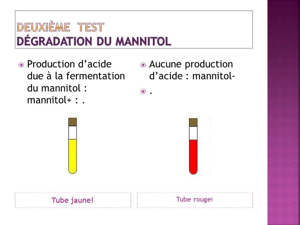 DEUXIÈME test Dégradation du mannitol