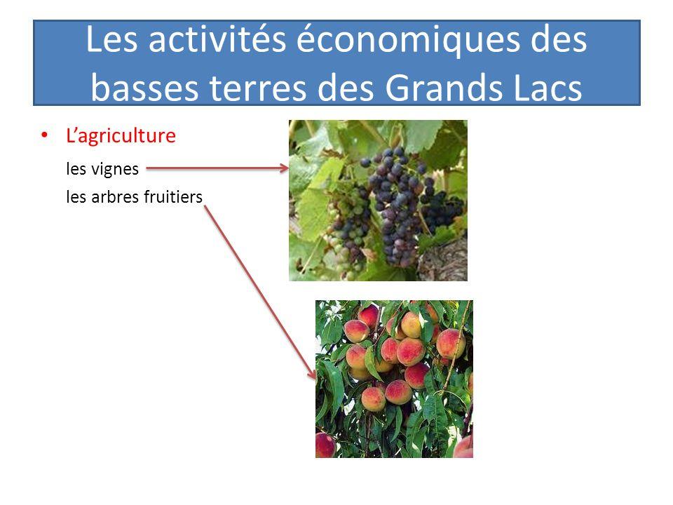 Les activités économiques des basses terres des Grands Lacs