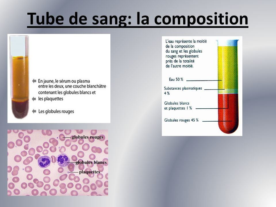 Tube de sang: la composition