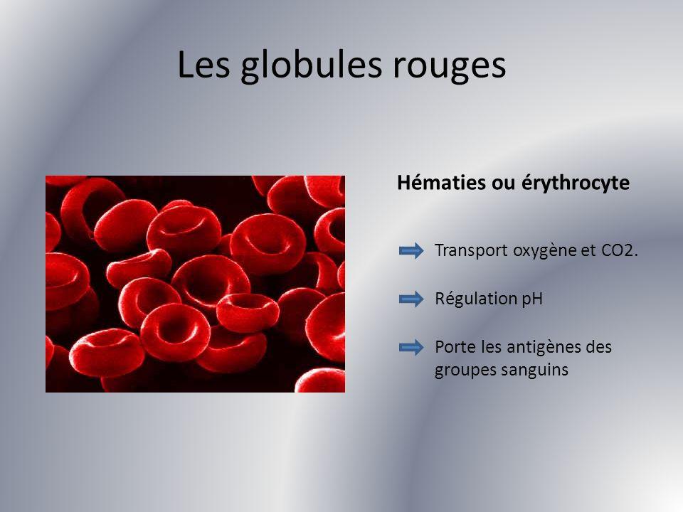 Les globules rouges Hématies ou érythrocyte Transport oxygène et CO2.