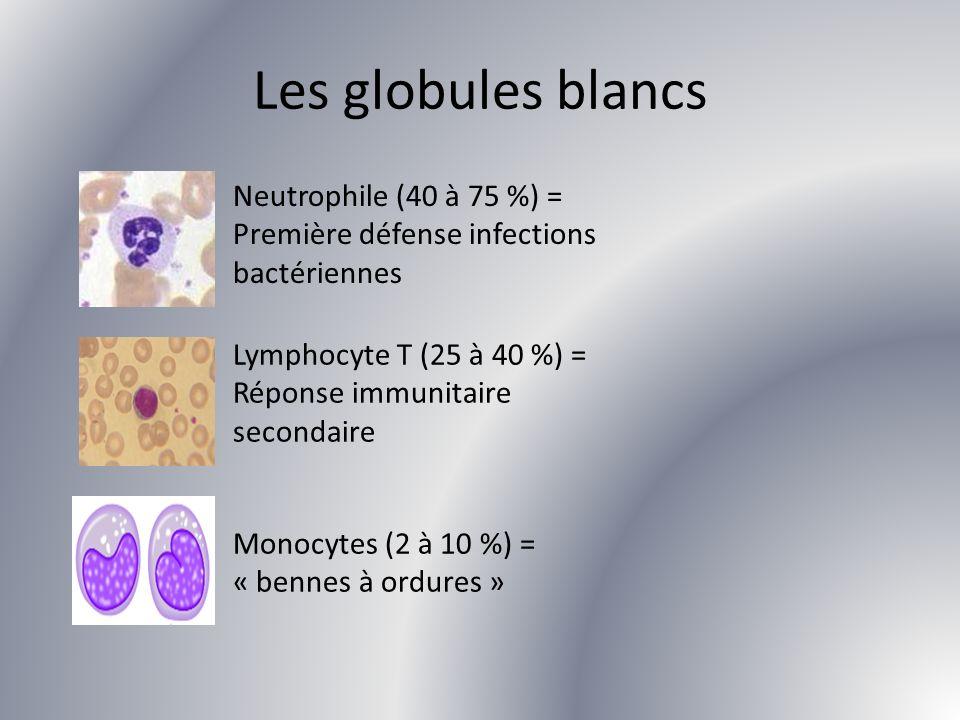 Les globules blancs Neutrophile (40 à 75 %) = Première défense infections bactériennes. Lymphocyte T (25 à 40 %) = Réponse immunitaire secondaire.