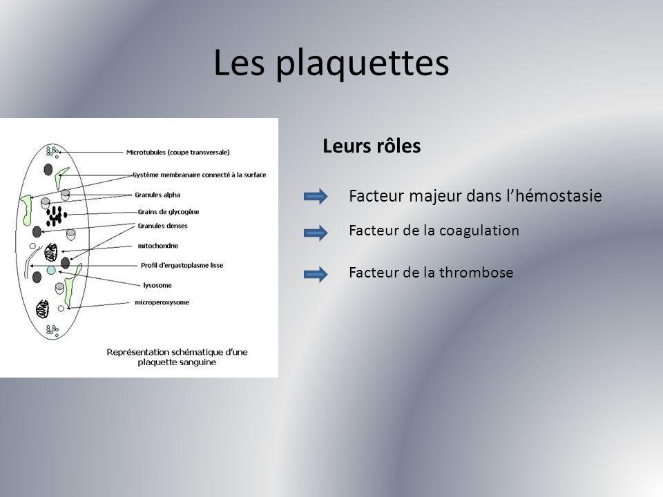 Les plaquettes Leurs rôles Facteur majeur dans l'hémostasie
