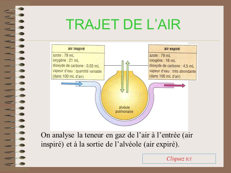 TRAJET DE L'AIR On analyse la teneur en gaz de l'air à l'entrée (air inspiré) et à la sortie de l'alvéole (air expiré).