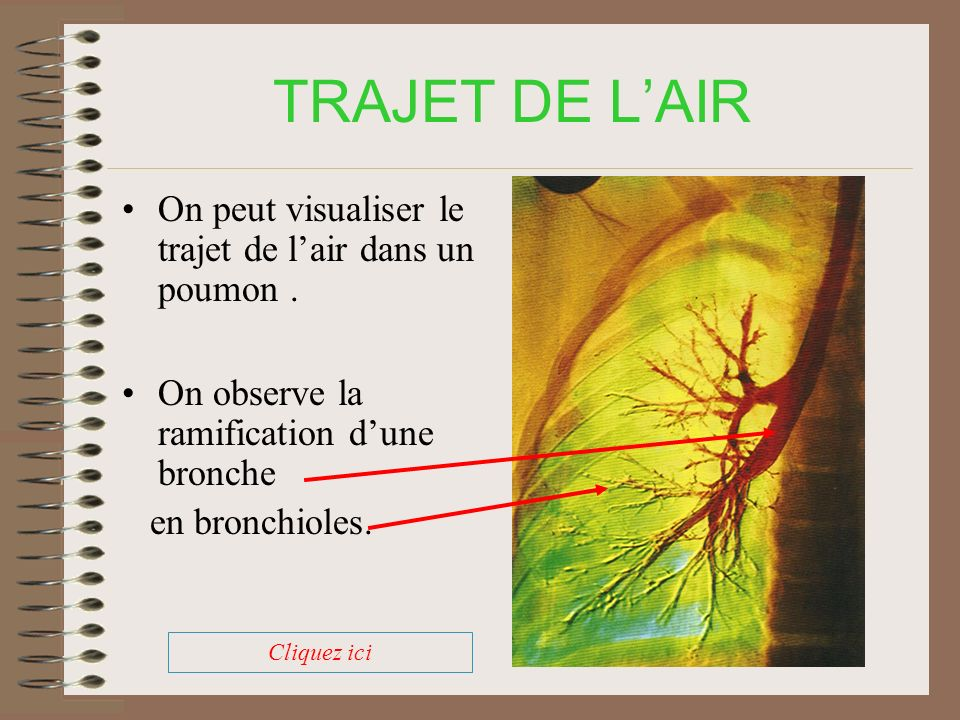 TRAJET DE L'AIR On peut visualiser le trajet de l'air dans un poumon .