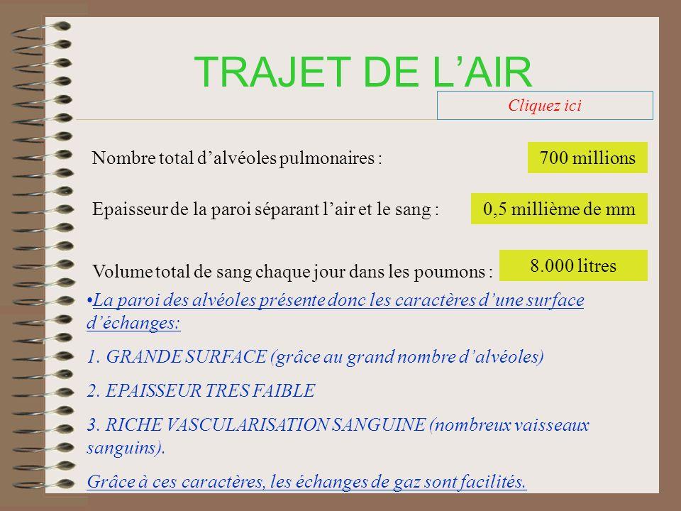 TRAJET DE L'AIR Nombre total d'alvéoles pulmonaires : 700 millions