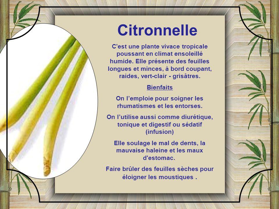 Citronnelle