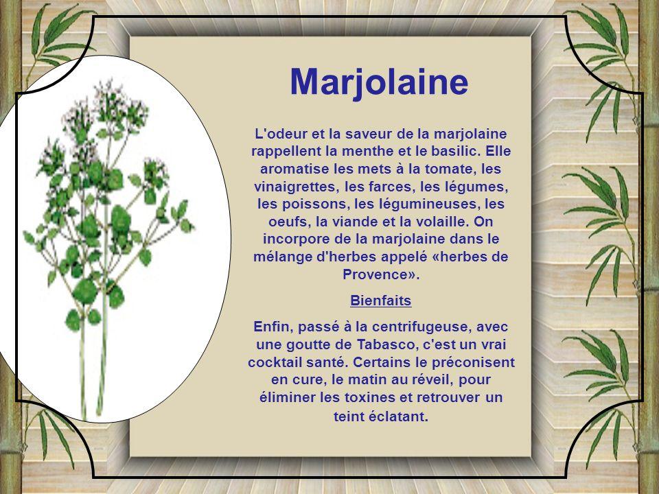 Marjolaine