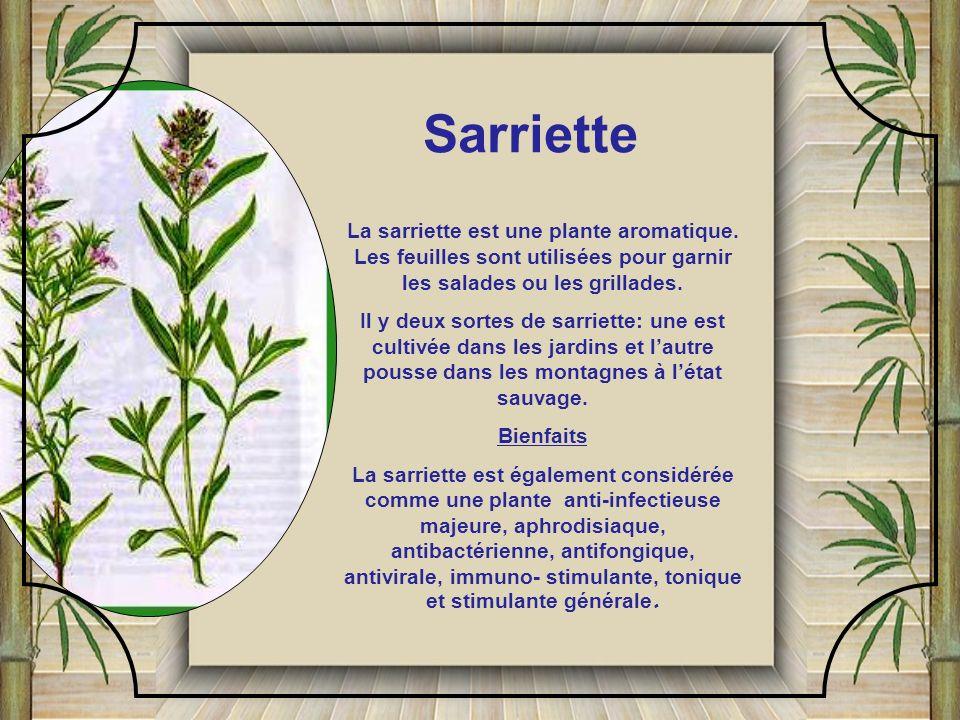 Sarriette La sarriette est une plante aromatique. Les feuilles sont utilisées pour garnir les salades ou les grillades.