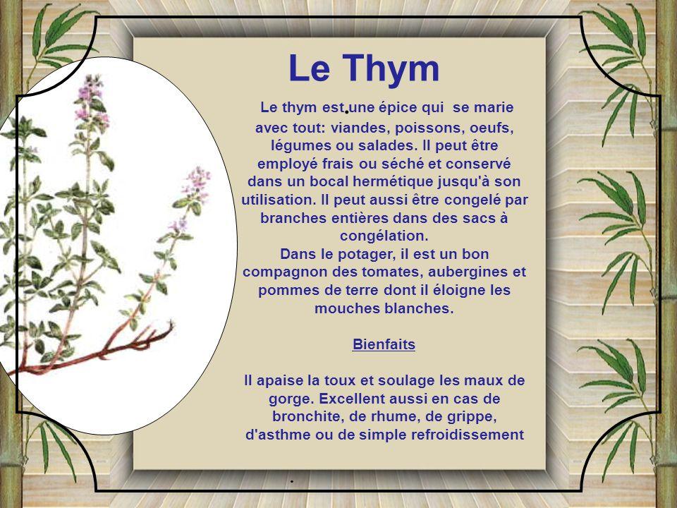 Le Thym .