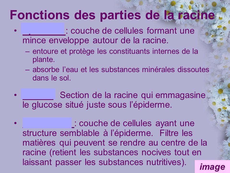 Fonctions des parties de la racine