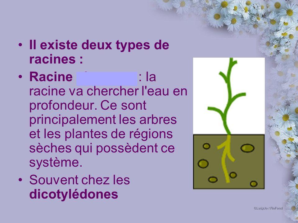 Il existe deux types de racines :
