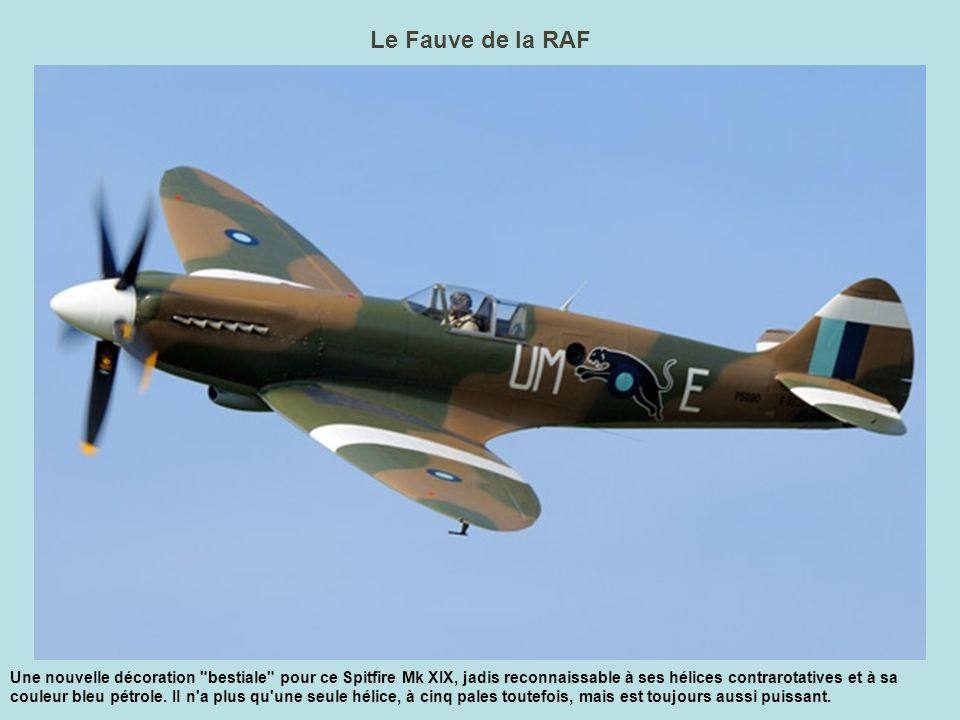 Le Fauve de la RAF