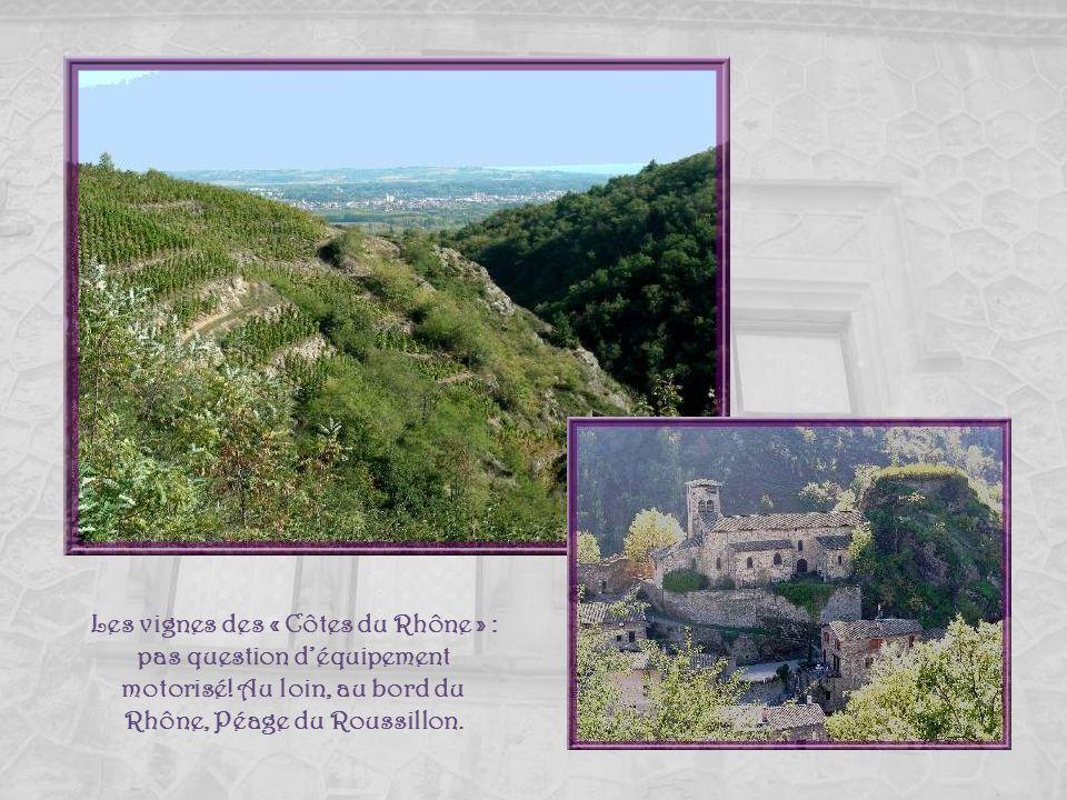 Les vignes des « Côtes du Rhône » : pas question d'équipement motorisé