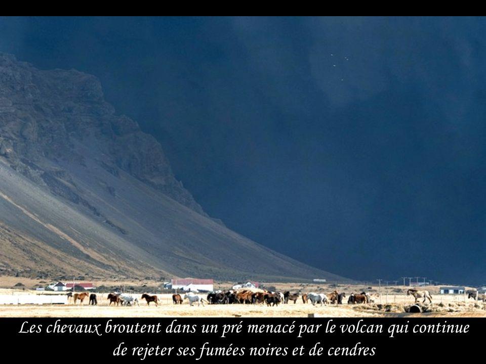 Les chevaux broutent dans un pré menacé par le volcan qui continue de rejeter ses fumées noires et de cendres