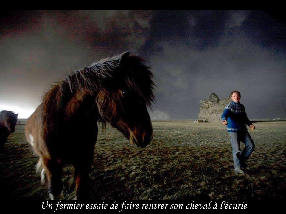 Un fermier essaie de faire rentrer son cheval à l écurie