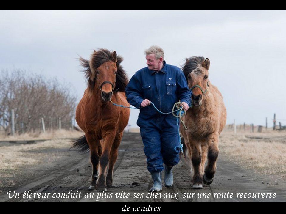 Un éleveur conduit au plus vite ses chevaux sur une route recouverte de cendres