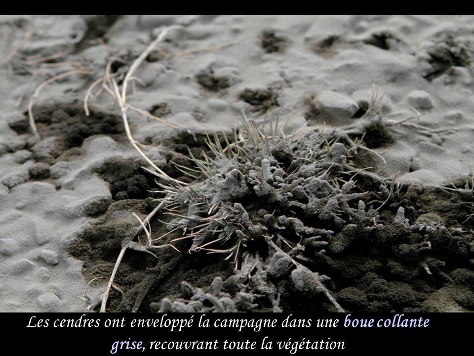 Les cendres ont enveloppé la campagne dans une boue collante grise, recouvrant toute la végétation