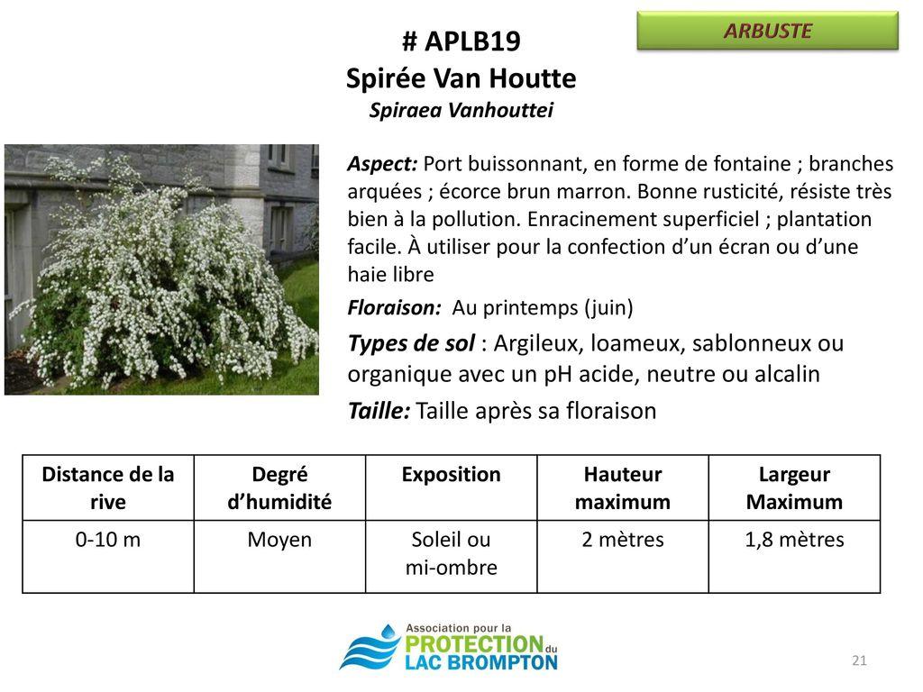 Campagne de renaturalisation des rives ppt t l charger - Taille des orchidees apres floraison ...