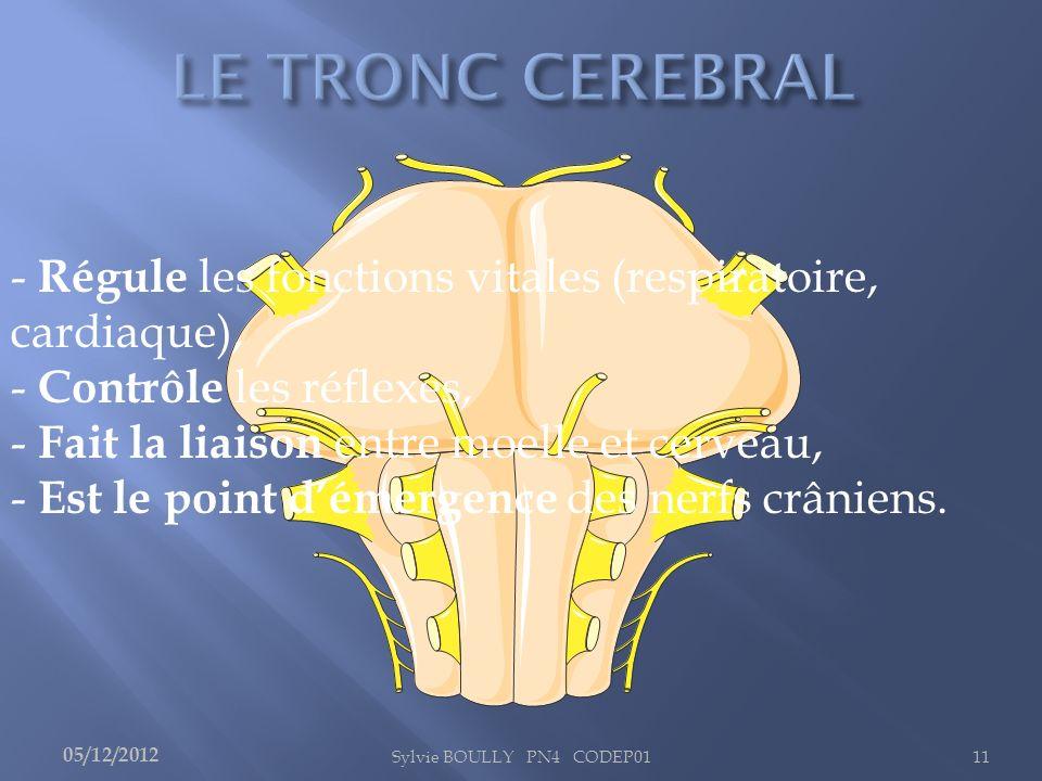 - Régule les fonctions vitales (respiratoire, cardiaque),