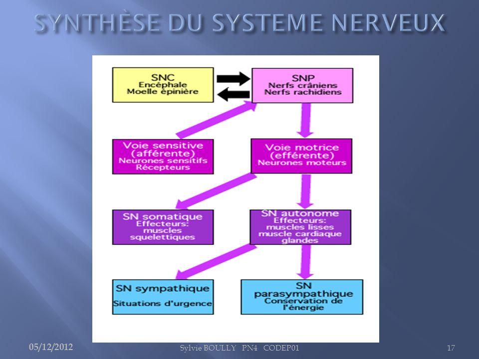 SYNTHÈSE DU SYSTEME NERVEUX