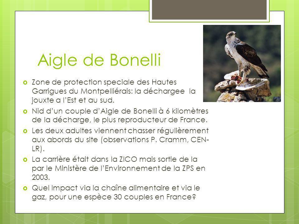 Aigle de Bonelli Zone de protection speciale des Hautes Garrigues du Montpelliérais: la déchargee la jouxte a l'Est et au sud.